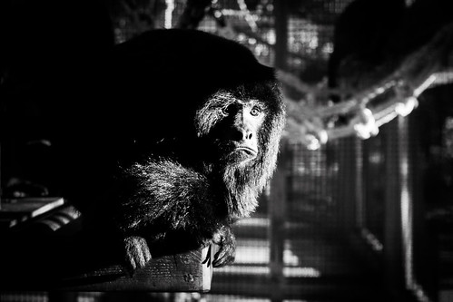 Monkey In The Shadows