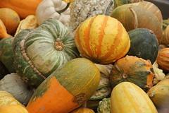 Zucche varie (Chiara Chiarachiara) Tags: autunno zucche verdura piovedisacco
