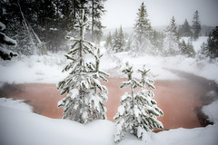 Pines and Tomato Soup Thermal (Joseph M. Campbell) Tags: winter nature yellowstone wyoming 2013