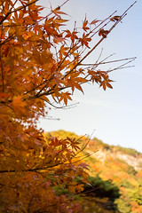 Autumnal leaves (Humpty*Dumpty) Tags: red filter mie pl 三重 赤 御在所 rx1 plフィルタ gozaisyo rx1r