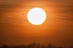 Sunset Banstead Downs / Air Traffic (AdrianJScott) Tags: sunset sun silhouette evening skies surrey airtraffic bansteaddowns