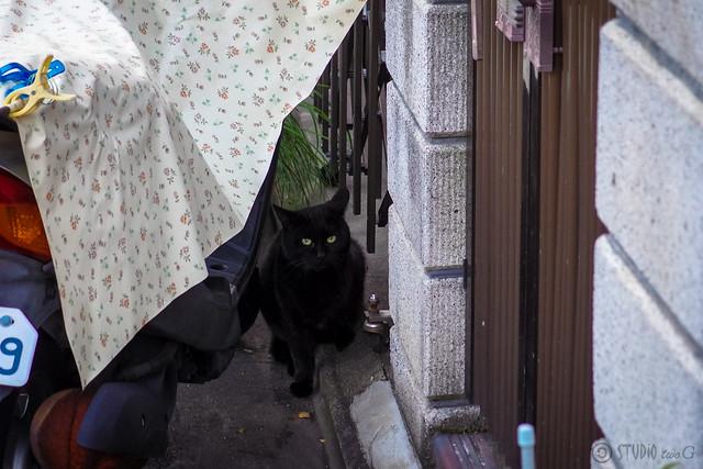 Today's Cat@2014-01-12