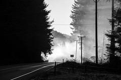Sometimes you see the light (stephencurtin) Tags: california road trees light blackandwhite usa reflections highway telephone 101 poles streaming damp thechallengefactory