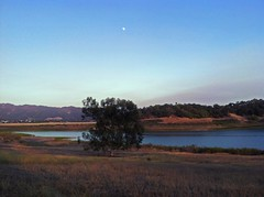 Lake Casitas, Wadleigh Arm area. Ojai, CA (Nathan Wickstrum) Tags: trees dogs nature swimming landscape photography oak wildlife lakes holes climbing camel rainbows ojai susnet la2ojai nathanwickstrum