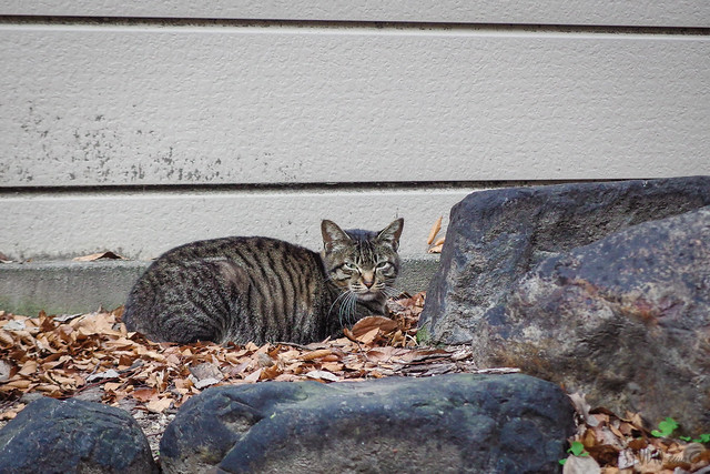 Today's Cat@2014-03-25