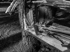 Broken tree (MortenHpictures) Tags: bw tree broken elements sorthvitt ullensaker jessheim svarthvitt nordbytjernet fujifilmx20