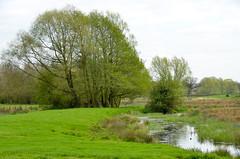St Albans, Hertfordshire (scuba_dooba) Tags: uk england st villa albans hertfordshire herts sancti albani