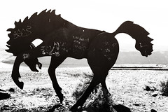 Dancing Iron Horse (07victor84) Tags: blackandwhite sculpture horse canon hobby gallopinghorse amateur yakima beginner ironhorse ironart canoncamera ironsculpture canon24105mm dancinghorse canonllense canon6d grandfathercutsloosetheponies