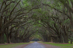 Wormsloe Oak Avenue (MichaelSOwens) Tags: nature georgia landscape historic southern coastal spanishmoss dirtroad marsh thesouth hdr wormsloe liveoaks maritimeforest americansouth historicsavannah