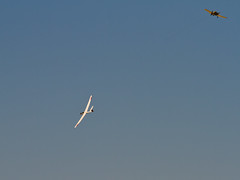 Gliding at Richmond (cupra1) Tags: richmond gliding glider raaf sailplanes twinastir callair
