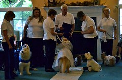 DSC_0068 (vweida) Tags: pets dogs pittsburgh therapy therapydogs kctclub