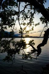 DSC_1728 (DeepLovePhotography) Tags: ocean sunset mountains tree beach nature silhouette vertical clouds landscape vancouverisland westcoast nikond7000 deeplovephotography seanhelmn