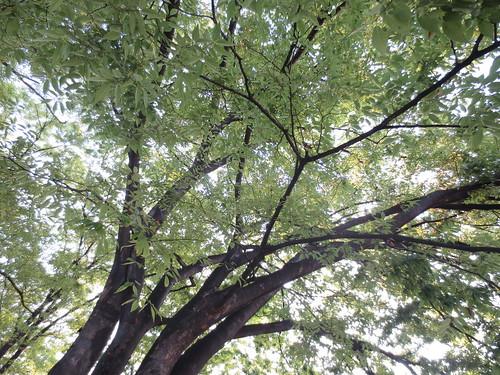 太陽を遮る木