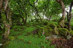 Faerie Zone: Walk with Care (Non Paratus) Tags: uk skye green forest scotland woods isleofskye innerhebrides glen dell uig copse trotternish faerieglen fairyglen innerisles 1635mmf28lii