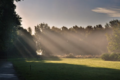 Shards of Light (Fields of View) Tags: park morning light sun canon sigma rays sunbeam beams marbury canoneos1000d