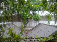 Auring (leciram) Tags: philippines typhoon haiyan yolanda 1000views puertoprincesa palawan maricel tifone auring filippine 2013 bagyo leciram