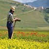 The pleasure of  working (Nespyxel) Tags: flowers field working campo fiori job norcia lavoro castelluccio prati contadino nespyxel stefanoscarselli