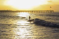 Ventura surfer at sunrise_3458 (picturelover6606) Tags: ocean california beach sunrise pier surf pacific surfing ventura seabirds venturapier