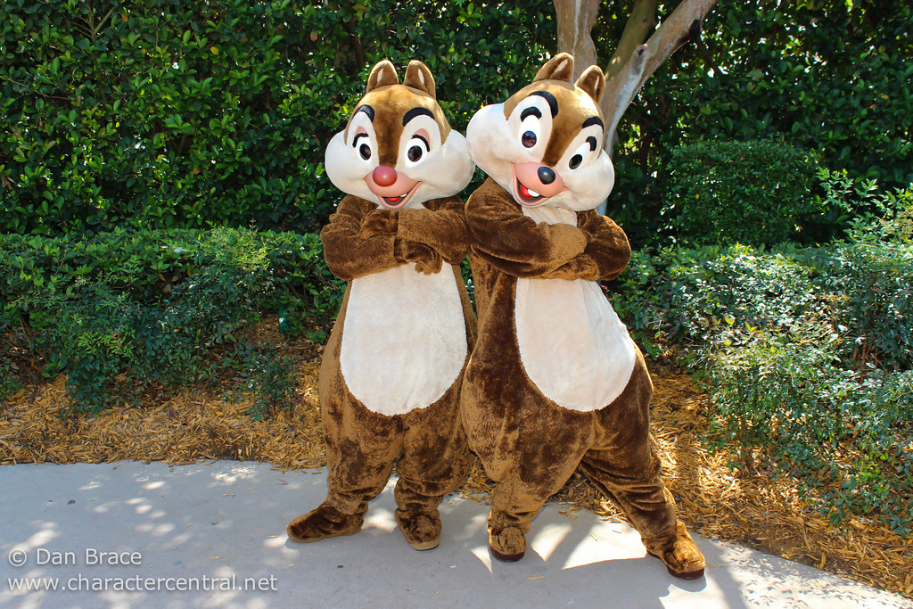 happy 71st birthday chip n dale disney character central blog