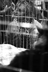 140126_mostrafelina_estraforum_0007 (Valentina Ceccatelli) Tags: mostra cats pets white black cat canon eos kitten feline gare january competition exhibition tuscany 7d felini gatto prato gatti gennaio valentina micio gara mici 2014 cuccioli gattini palazzetto maliseti ceccatelli valentinaceccatelli estraforum