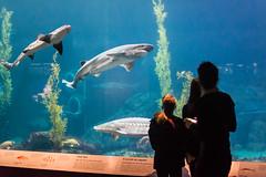 Monterey Bay Aquarium (lwarren18) Tags: ocean california fish tourism aquarium monterey underwater montereybayaquarium montereybay aquatic