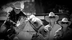 Rodeo 81 (iSPY Photography) Tags: yards horse spurs cowboy clown australia pickup bull nsw rodeo cowgirl steer saddle bronc bridle roping cooma akubra rodeorider coomarodeo2014