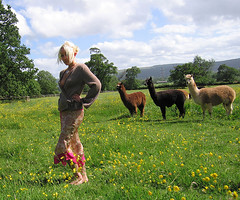 Follow your leader (jonathan charles photo) Tags: art alpaca topf25 fashion photo jonathan charles clark belle judy wrington jonathancharles chercherlafemme