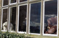 hopton hall bears in window (David John Hale) Tags: window gardens hall derbyshire bears snowdrops hopton