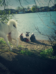 Dog day afternoon! (jansos) Tags: london thames riverthames dogdayafternoon