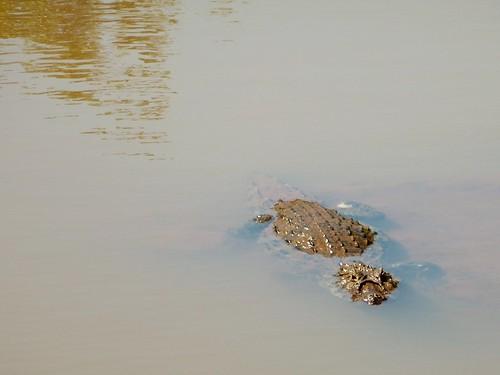 Laisse pas traîner tes tongs, Chutes d'Iguazu, Argentine