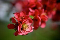 JE-IMG_0649 (juli_ei) Tags: flower blossom blume blute flowerphotography