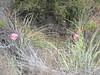 CIMG6435 (kazadmanesh) Tags: و بهار خشکسالی