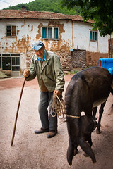 A peasant with his donkey (v.nemanja1) Tags: poverty street house home animal happy holding village poor documentary donkey shy rope peasant