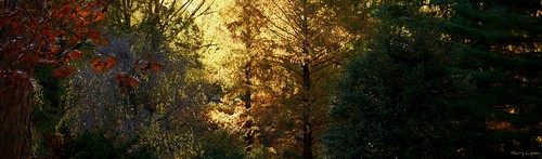 """Forest Light • <a style=""""font-size:0.8em;"""" href=""""http://www.flickr.com/photos/52364684@N03/32301631743/"""" target=""""_blank"""">View on Flickr</a>"""