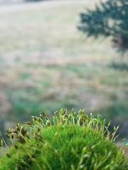 Moss (finlaymackenzie) Tags: farm flower walking cloudy wet world nature sky night fencepost mossy moss inverness macro spring march sunset miss highlands green scotland