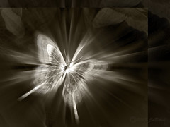 Light diving (CaBAsk! on and off. Thank U for the visit ♥) Tags: absract art butterfly bomomo graphics olympus digital manipulation black white sepia freedom light norway expression imagination fantasy blur metamorphose photoshop simply superb artdigita artshow