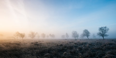 Winter morning (J C Mills Photography) Tags: peakdistrict derbyshire leash fen winter mist frost morning light landscape uk england trees birch moorland