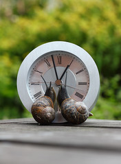IMG_7938 Checking out the new neighbour [Explore] (Alisonashton1) Tags: clock looking time circles shell snails sidebyside antennae lookalike inquisitive