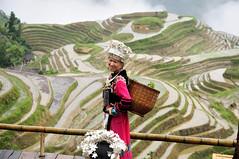 Longji (Dragon's Backbone) Rice Terraces, Yangshuo , Guangxi Autonomous Region, China (tangtang3TanG) Tags: china dragon rice yangshuo terraces region backbone guangxi longji autonomous dsc7338