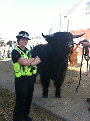PC Amanda Hanusch-Moore and bull, Great Yorkshire Show 2013 (NorthYorkshirePolice) Tags: show amanda pc yorkshire great north police hanuschmoore