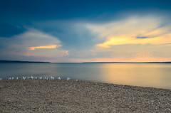 Ghostly Gulls (Bryan O'Toole) Tags: seagulls ontario canada beach landscape evening nikon eveningsun harmony lakesuperior manfrotto saultstemarie northernontario waterscape algoma kenko leefilters kenkopro1d nikkorafs2470mmf28 harmonybeach nikond7000 thebigstopper