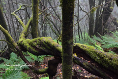 _DSC0983 (Amacord) Tags: mountain ecology rock spectacular landscape daylight spring spain rainforest rocks europe mount coastal wilderness canaryislands springtime ecosystem lagomera unpolluted