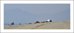 Au fond...les Pyrnes (sudfrance30) Tags: mer po vin collioure vignoble plage pyrnes languedocroussillon mditerrane banyulssurmer saintcyprien sudfrance30