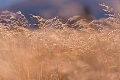 Autumn (mariyakey) Tags: autumn sun mountains yellow october warm kazakhstan