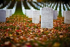 Fallen leaves and fallen men (Ausamah) Tags: autumn trees red orange woman usa man sexy green art fall nature beautiful cemetery graveyard leaves yellow sex stone infantry arlington dead soldier photography death virginia photo dc washington bahrain amazing nice war branch colours peace force gulf place purple head military air rip headstone tomb tombstone navy arab fallen seals rest marines resting martyr airforce veteran officer    ausamah alabsi