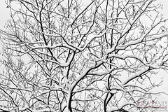 """Winter mood • <a style=""""font-size:0.8em;"""" href=""""http://www.flickr.com/photos/49106436@N00/10961164976/"""" target=""""_blank"""">View on Flickr</a>"""