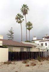 threesome (naprisi) Tags: california usa house tree film beach analog america 35mm canon palms kodak windy american analogue threesome kalifornien kleinbild