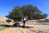 طلحه (Mansour Al-Fayez) Tags: trip travel tree green water beautiful beauty smile rock outside sand saudi saudiarabia ksa السعودية الرياض اشجار صحراء وادي رمال شعيب طلح