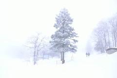 a whitescape (yukkbie) Tags: winter snow tree japan nikon nikkor yamagata winterlandscape {vision}:{outdoor}=0779 {vision}:{clouds}=0509