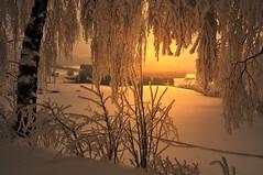 Winterzauber (Mariandl48) Tags: schnee sonnenstrahlen birke draht schneelandschaft strucher eiskristalle vision:sunset=0701 vision:outdoor=0795 vision:sky=0797